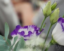 purple edges016